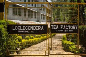 Loolecodera-tea-factory